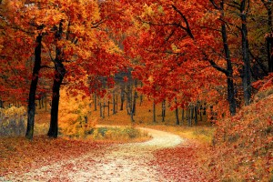 Get Ready For Autumn Fitness